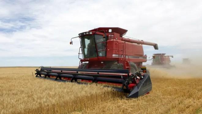 wheatmodap.jpg