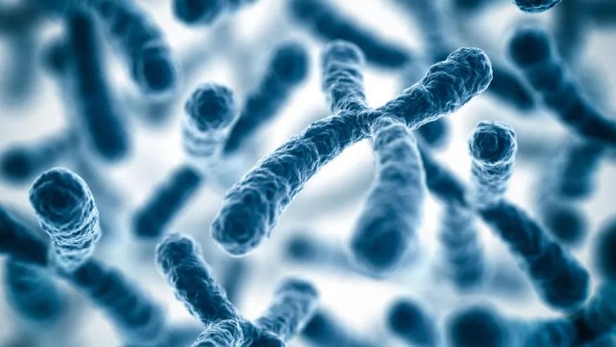 Chromosomes DNA genes istock.jpg