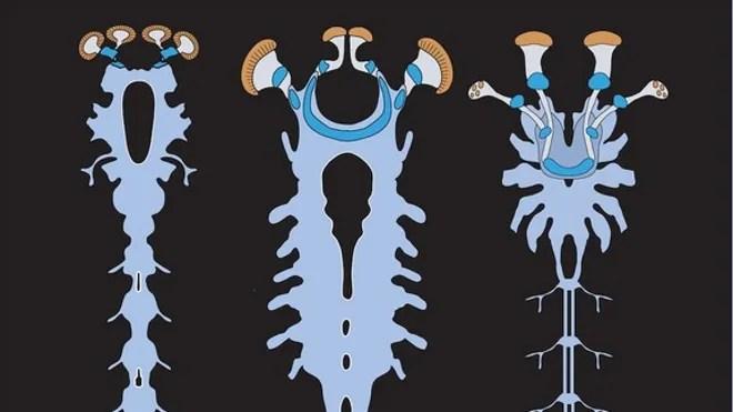 fossil-nervous-system