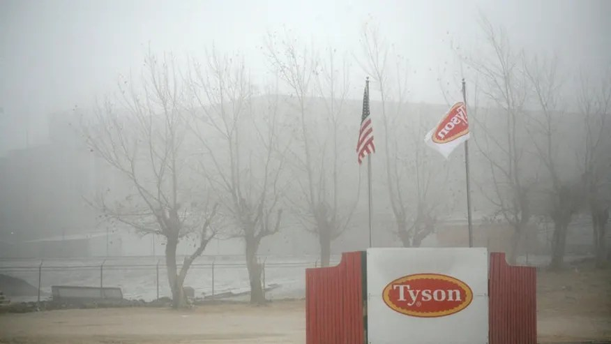 Fog shrouds the Tyson slaughterhouse in Burbank, Washington