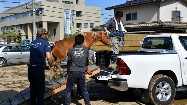 A horse stranded on a rooftop after torrential rain, is rescued in Kurashiki, Okayama Prefecture, Japan July 9, 2018. Picture taken on July 9, 2018.   @Peace Winds Japan/Handout via REUTERS ATTENTION EDITORS - THIS PICTURE WAS PROVIDED BY A THIRD PARTY. NO RESALES. NO ARCHIVES. - RC1B0B48EDF0
