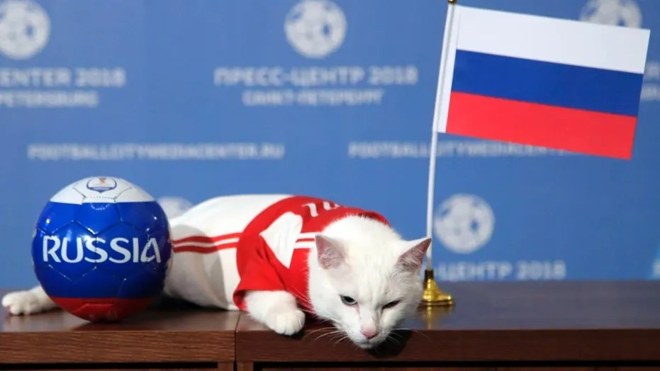 Achilles the cat has a psychic ability to predict soccer matches and will be making selections in the 2018 World Cup.