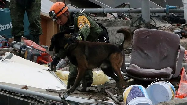 A Mexican soldier and his dog search for survivors in the rubble of a collapsed building after an earthquake in Mexico City, Mexico September 23, 2017. REUTERS/Henry Romero - RC1BDE7EE6E0