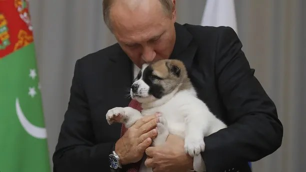 Russian President Vladimir Putin kisses a Turkmen shepherd dog, locally known as Alabai, presented by Turkmenistan's President Gurbanguly Berdimuhamedov during a meeting in Sochi, Russia October 11, 2017. REUTERS/Maxim Shemetov - UP1EDAB0QSY5A