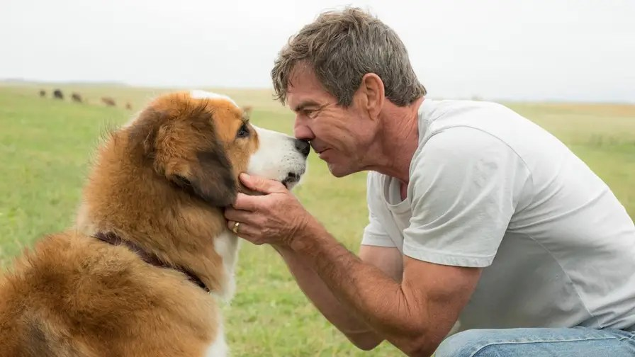 Premiere for 'A Dog's Purpose' cancelled after leaked video shows a dog allegedly being physically forced to perform water stunt against its will. Dennis Quaid, trainers, and film's writer defend treatment of animals while PETA calls for boycott
