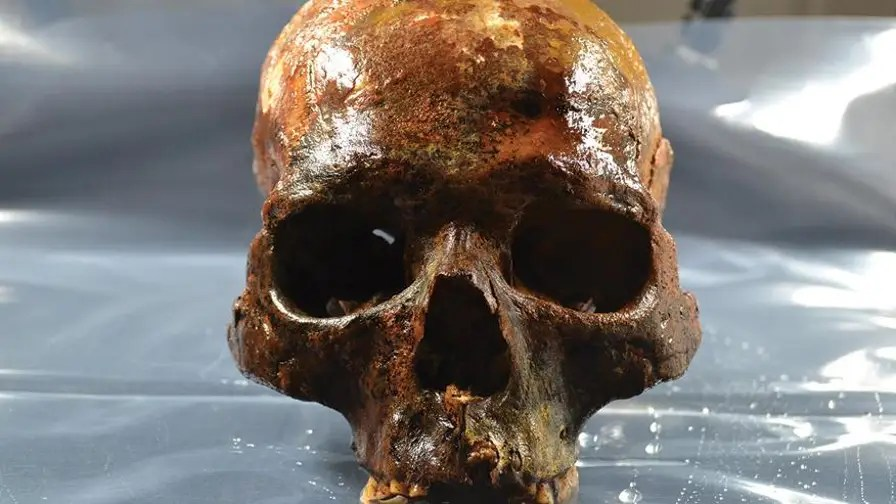 Gruesome: skulls found impaled on stakes