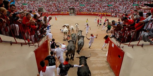 Revellers and fighting bulls arrive at the bullring during the running of the bulls at the San Fermin Festival, in Pamplona, northern Spain, Sunday, July 14, 2019.