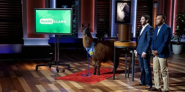 """Joseph Parisi and partner Nick Nevarez present """"Guard Llama"""" to """"Shark Tank"""" hosts."""