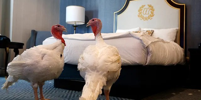 Bread and Butter, pictured here in their hotel room at the Willard InterContinental Hotel in Washington, D.C., will be pardoned by President Trump on Tuesday.