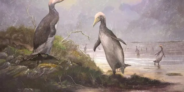 Plotopterids like these Copepteryx grew to enormous sizes.