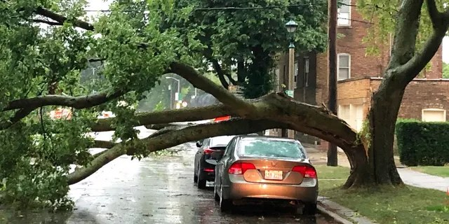 Part of a tree that had split at the trunk lies on a road in Oak Park, Ill., while also appearing not to have landed on a car parked on the road, after a severe storm moved through the Chicago area Aug. 10. (AP Photo/Dave Zelio)
