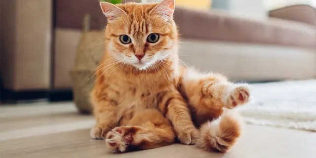 Cat owners can also try to replicate the experiment at home. (iStock)