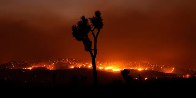 The Bobcat Fire burns in the distance beyond a Joshua tree Saturday, Sept. 19, 2020, in Juniper Hills, Calif.