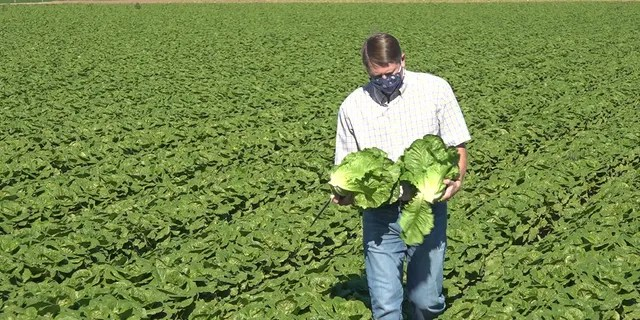 Farmer John Boelts of Desert Premium Farms grows about 2,000 acres of fresh romaine and iceberg lettuce each season. He says the entire area of Yuma County grows about 100,000 acres in total (Stephanie Bennett/Fox News).