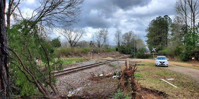 A tree was blown down along side the railroad tracks in northeast Lincoln County, Miss., following a mid morning bout of severe weather, Wednesday, March 17, 2021. Forecasters believe more severe weather is expected Wednesday with the potential for massive tornadoes, downpours and hail the size of tennis balls. (Brett Campbell/The Daily Leader)