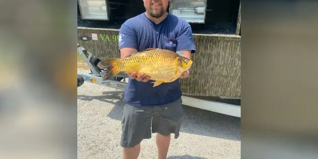 The Virginia Department of Wildlife Resources confirmed on its Facebook page that a local angler had set a new record after catching a 3 pound, 9-ounce goldfish in Hunting Creek.