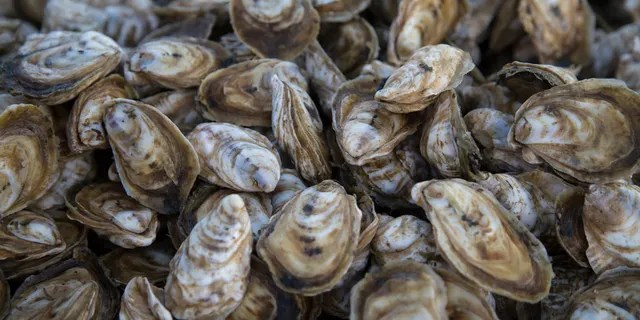 FOX News has found some of the top-rated oyster restaurants around the country using Tripadvisor reviews.