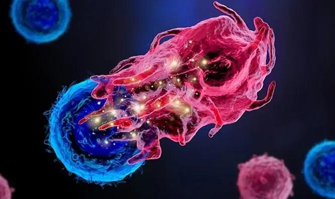 הטכנולוגיה שתאפשר 'הצצה' לתאים חיים