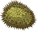 durian-md