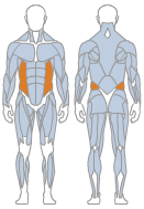 Picture of Obliques