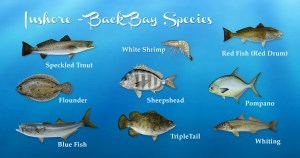 Alabama inshore fishing, AL back bay species, speckled trout, white shrimp, red fish, red drum, founder, sheepshead, pompano, blue fish, triple tail, whiting