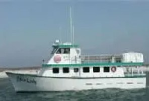 orange beach party boat fishing and cruises
