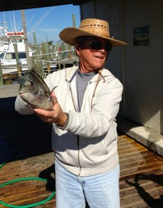 orange beach al inshore fishing charter father & sheepshead