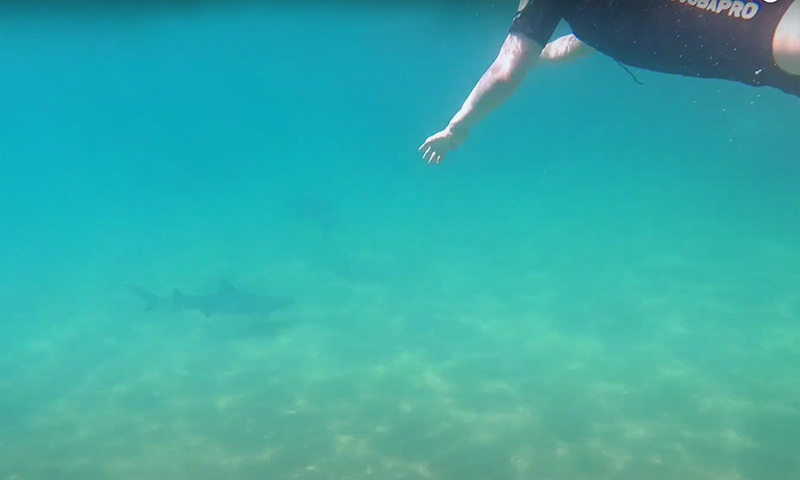 Travel Galapagos-Islands swimming with sharks