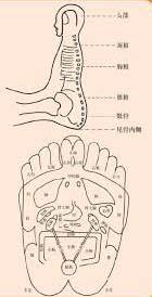acupuncture Reflexology massage