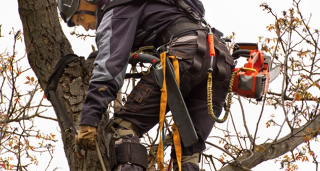 The Road Map to Pursue a Career as An Arborist