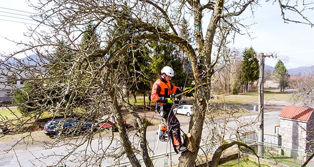 Make the Right Call – DIY or Pro For Tree Care!