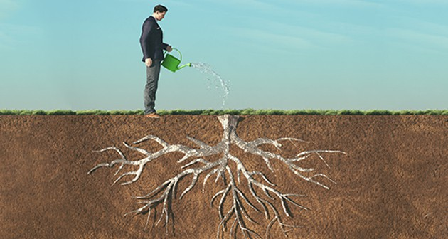 Deep Root Fertilization – Nourishment Through Roots