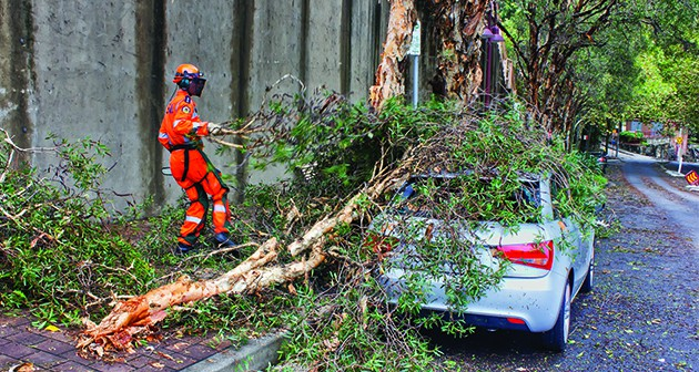 Signs That Help Evaluate the Need of Emergency Tree Service for your Yard
