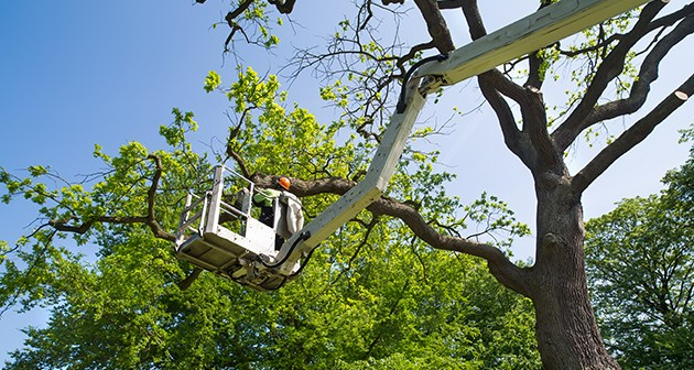 Smart Tree Pruning for Better Tree Health and Safety