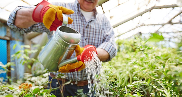 Care for your Trees and Shrubs in 5 Simple Ways