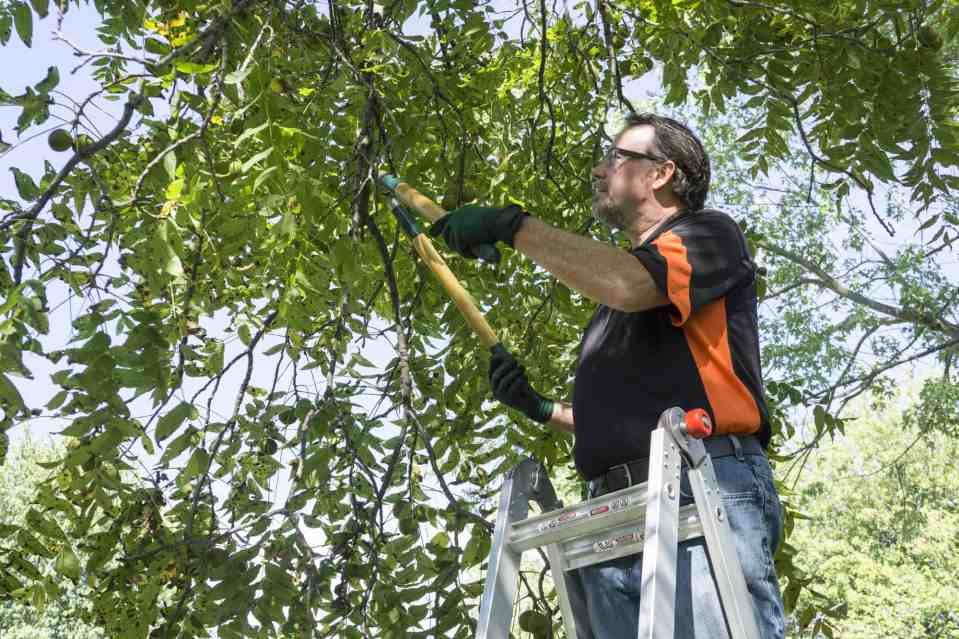 Top 5 Tree Pruning Tips For Great Looking Trees