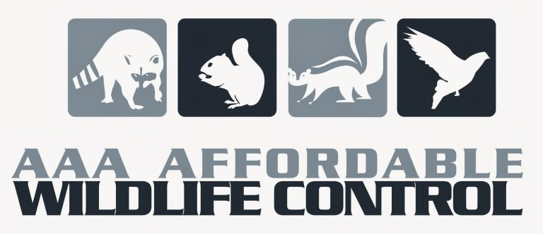 Affordable Wildlife Control Toronto