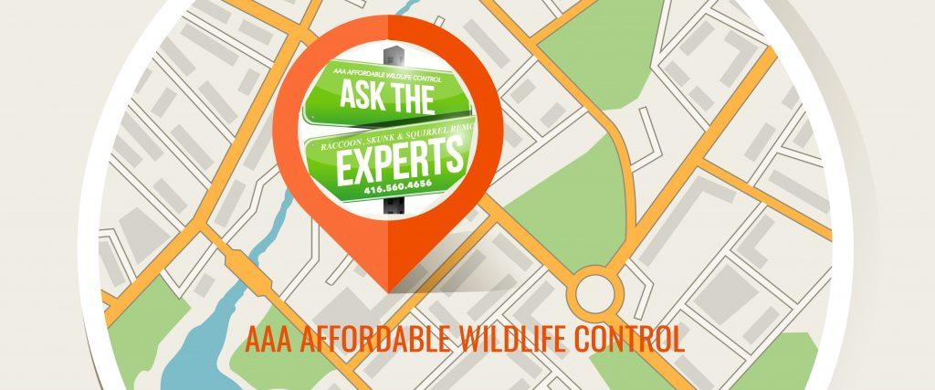 Wildlife Control, Wildlife Control Toronto, Wildlife Control Price, City Of Toronto, Affordable Wildlife Control.