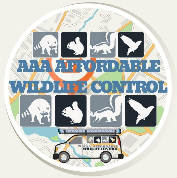 Great Wildlife Control Reviews - AAA Affordable Wildlife Control, Best Wildlife Control Price In City Of Toronto, Affordable Wildlife Removal