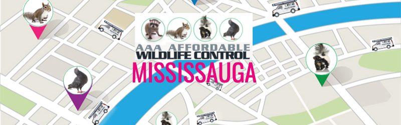 Wildlife Removal Mississauga, Animal Removal Mississauga