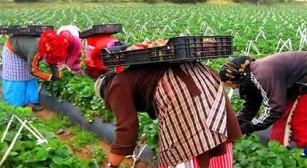 إسبانيا ترغب في أزيد من 16 ألف عاملة مغربية بحقول الفواكه الحمراء برسم سنة 2019 / 2020