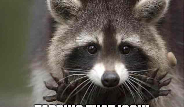 "Image of Raccoon saying, Let me assist you tapping that icon"" with hands outstretched"