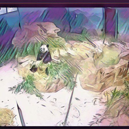 cartoon image of a panda eating bamboo on a webcam.