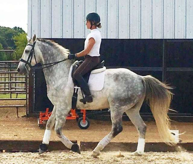 Aada Is For Amateur Dressage Riders Of All Ages Aada Is An Educational And Informational Resource For Every Aa From Beginners At The Lower Levels Of
