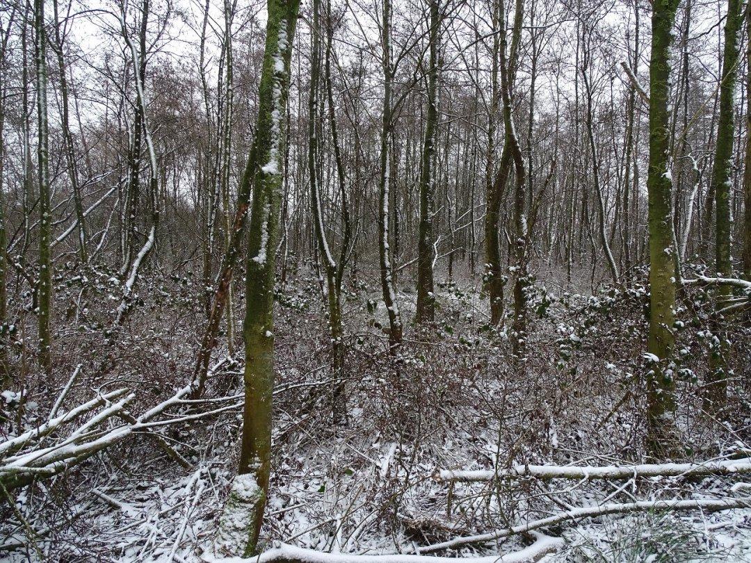 Winterbosje