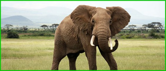 Elefanten im                                                     Zirkus