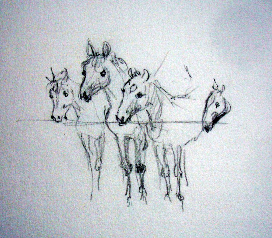 zuidlaardermarkt Horse fair art sketch1