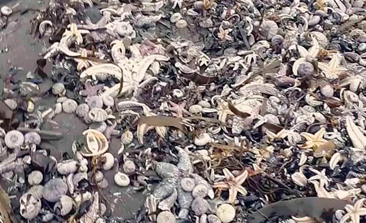 روس کا سیاحتی جزیرہ نما ساحلی مقام سمندری حیات کا قبرستان بن گیا، ہزاروں ہلاک، تحقیقات شروع