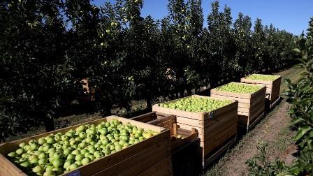 سوویت یونین کے بعد روس ایک بار پھر زراعت میں حددرجہ برآمدات کرنے میں کامیاب