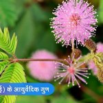 Benefits of Chui Mui Plant